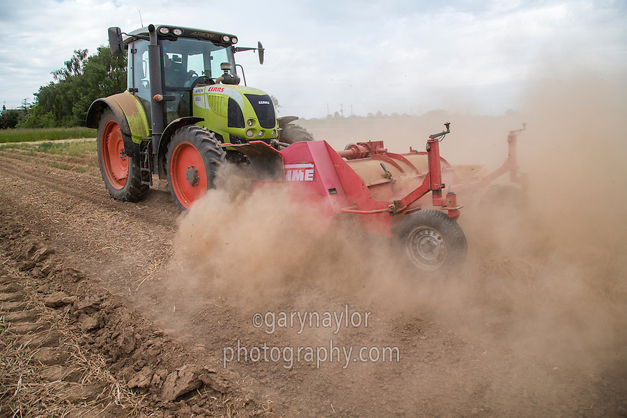 Topping daffodil ridges before harvest - Lincolnshire, June