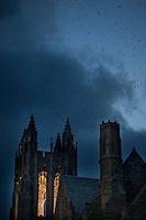 Chimney Swifts; Chaetura pelagica; PA, Philadelphia, <br /> St. Joseph's University