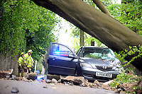 2014 05 10 Family of four escape unharmed after 60ft tree falls on their car,Swansea,UK