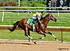 Good Feng Shui winning at Delaware Park on 8/25/14