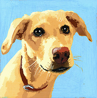 Portrait of Yellow Labrador dog