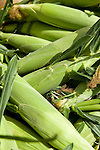 Close-up of fresh organic corn at the Coventry farmers market, Connecticut