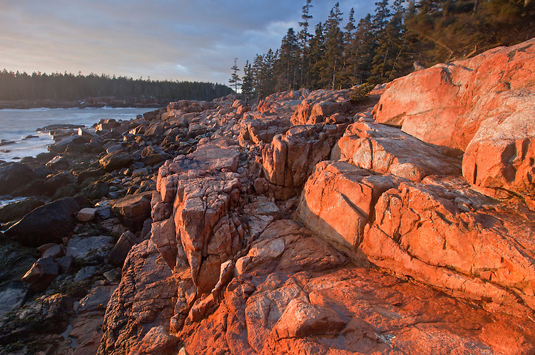 Granite cliffs along the Ship Harbor Trail glow at sunset on Mount Desert Island in Acadia National Park, Maine, USA