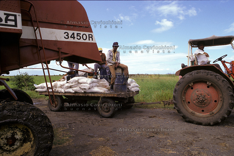 Novembre 1984, Nicaragua, Coltivazione di riso, Mietitura con trebbiatrice.<br /> November 1984, Nicaragua, rice cultivation, Harvest with a threshing machine.