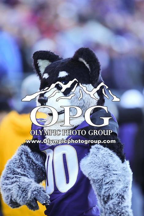 Nov 27:  Washington's mascot Harry against Washington State.  Washington defeated Washington State 45-10 at Husky Stadium in Seattle, WA.