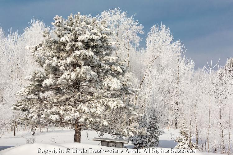 Hoar frost in northern Wisconsin.