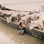 The river is used to transport animals and goods from Dhaka to the Sunderbans, Bangladesh.