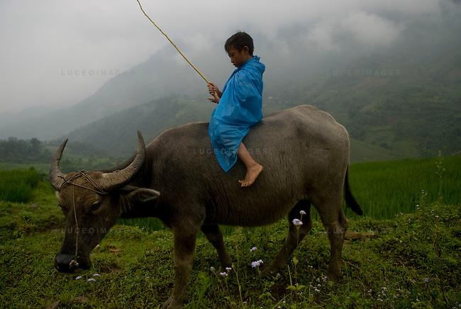 A Vietnamese boy rides his water buffalo home to his minority village outside of Sapa, Vietnam.