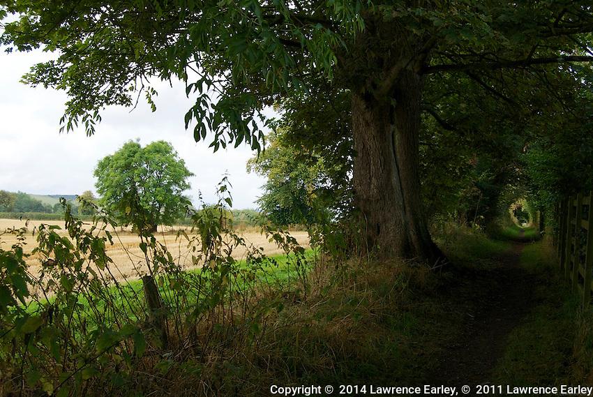 Walking toward Chollerford