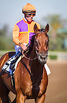 ARCADIA CA - JUNE 04: Beholder #2, with jockey Gary Stevens aboard to win the Vanity Mile at Santa Anita Park on June 4, 2016 in Arcadia, California. (Photo by Zoe Metz/Eclipse Sportswire/Getty Images)