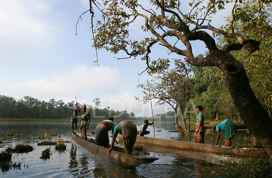Nepalese workers set off in dug-out canoes to harvest water weeds in a lake in Chitwan National Park, Nepal.
