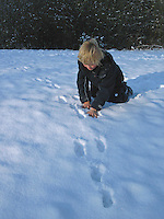 Junge, Kind zeigt auf Spur, Spurensuche, Feldhase, Feld-Hase, Hase, Trittsiegel, Spur, Pfotenabdrücke im Schnee, Lepus europaeus, Lepus capensis, Brown hare, Lièvre brun