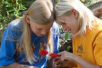 Kinder, Geschwister betrachten Blumen, Blume, Mohn, Klatschmohn, Klatsch-Mohn, Papaver rhoeas