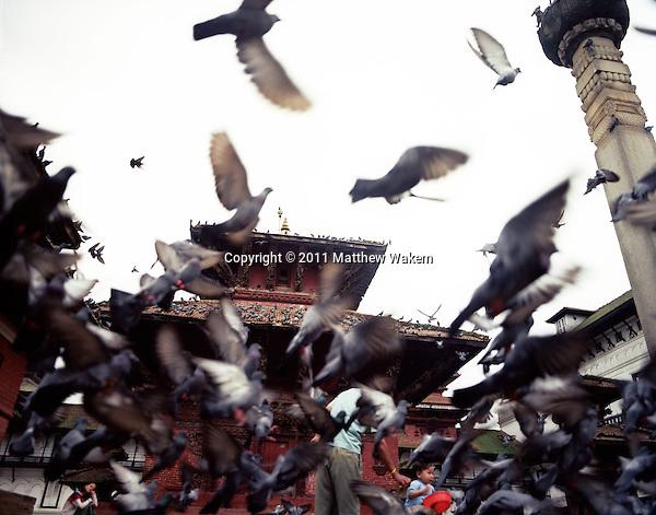 KATHMANDU, NEPAL : Pigeons take flight while being fed by a young boy in Dunbar Square. Kathmandu, Nepal.
