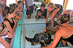 Loggerhead Turtle At S. F. S.