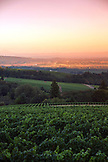 USA, Oregon, Willamette Valley, vine landscape with the Willamette Valley in the distance, White Rose Estate Vineyard and Winery in Dayton
