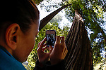 Allison takes a picture of a giant Redwood in Muir Woods National Park in Mill Valley, California. (Photo by Brian Garfinkel)