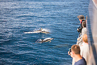 Dolphins seen near Whakatane and Tauranga in the Bay of Plenty, North Island, New Zealand