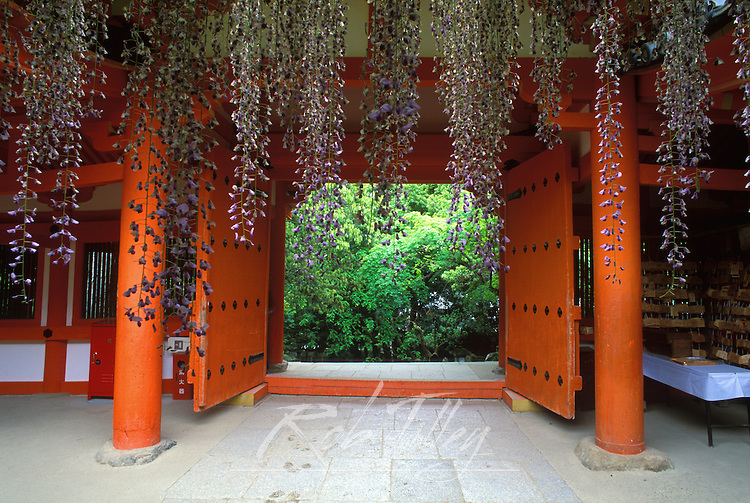 Kasuga Shrine Wisteria, Nara, Japan