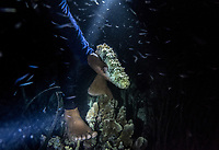Marjono Lessing, 35, holds on to a sea-cucumber he has just caught whilst fishing at night near Kabalutan village. Sea cucumbers are a major trade item for the Bajau, and have been for decades. (Photo: Aurélie Marrier d'Unienville)