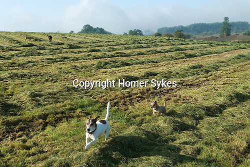 Toby Brendan Sept 2015 Fosse Meads Farm North Kilworth Leicestershire