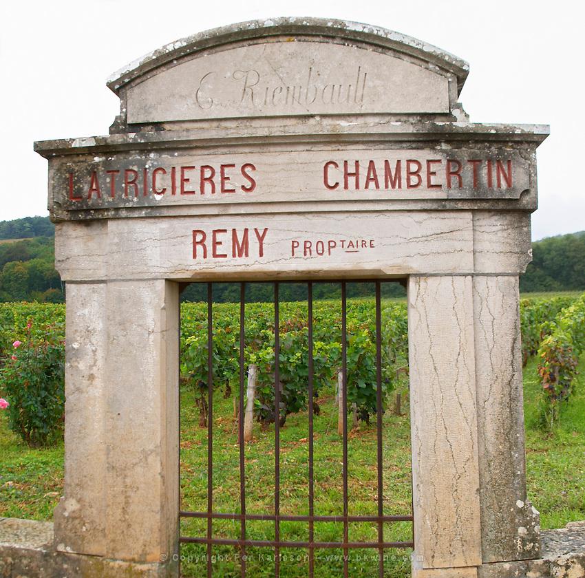 Vineyard. Latricieres Chambertin, Domaine Remy. E Riembault.  Gevrey Chambertin, Cote de Nuits, d'Or, Burgundy, France