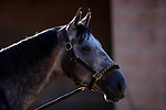 OCT 21:American Theorem prepares for the Breeders' Cup Juvenile at Santa Anita Park in Arcadia, California on Oct 21, 2019. Evers/Eclipse Sportswire/CSM