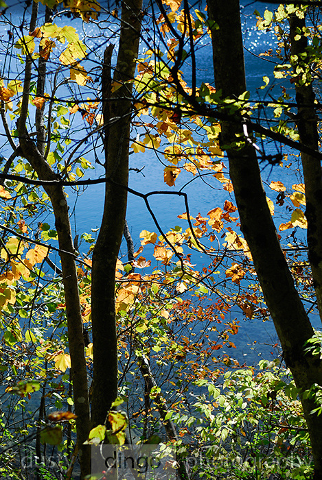 Lake surface viewed through curtain of autumn leaves and tree trunks. Plitvice National Park, Croatia