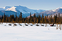 Ken Anderson runs through a scrub-spruce swamp with the Nulato Hills in the background three miles after leaving the Kaltag checkpoint in Interior Alaska during the 2010 Iditarod