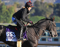 Hymn Book, trained by Shug McGaughey, trains for the Breeders' Cup Dirt Mile at Santa Anita Park in Arcadia, California on October 30, 2013.