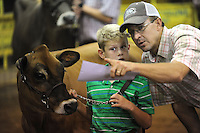 NWA Democrat-Gazette/ANDY SHUPE<br /> Corbin Stearman, 8, of Prairie Grove smiles Thursday, Sept. 3, 2015, as he holds onto the lead rope of a Jersey heifer raised by his cousin, Eric Hill, before showing it in the Premium Livestock Auction at the Washington County Fair at the county fairgrounds in Fayetteville. Businesses and individuals bid on 4H and FFA projects to support the students' efforts to continue to show their animal and begin new projects.