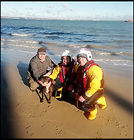 Dinky the dog survives cliff fall.