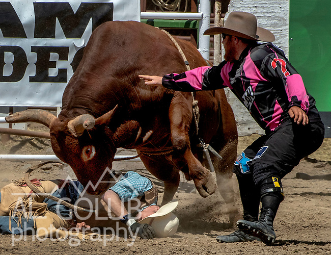 Bull Rider need help from Bullfighter at the 68th annual Oakdale Saddle Club Rodeo on Sunday, April 14, 2019.  (Al Golub/Record Photo)