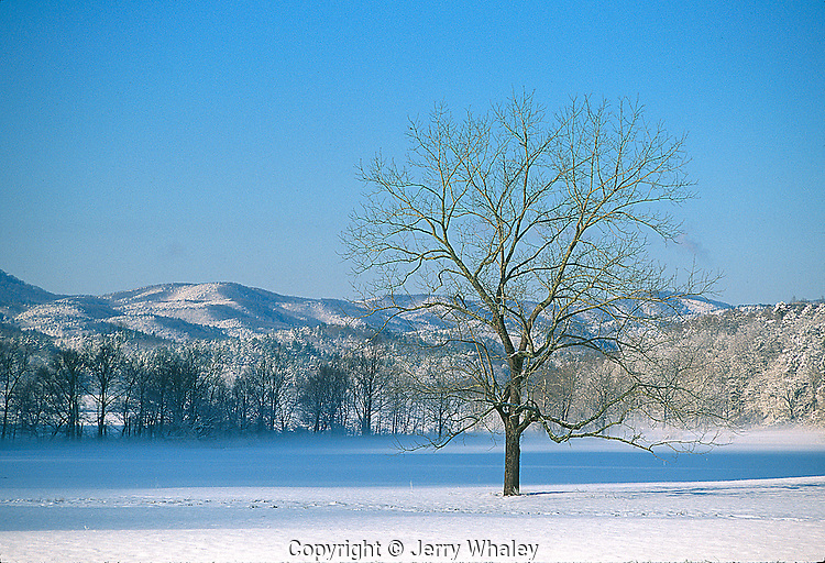 Lone Tree, Cades Cove, Snow, Great Smoky Mountains NP, TN