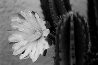Backyard Cactus Flower,  Film,  2019