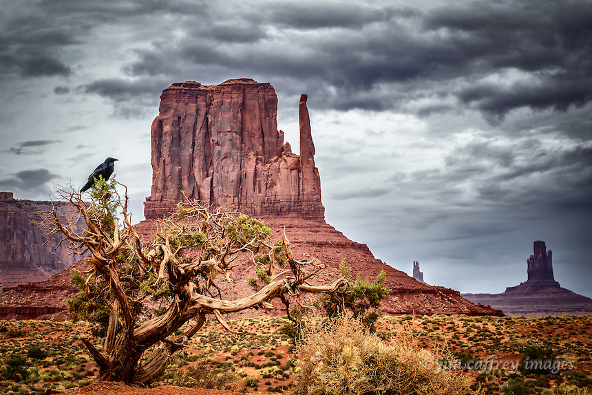 A raven perched on a juniper tree in Monument Valley withthe West Mitten in the background