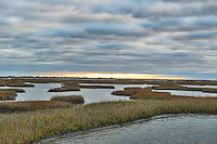 We had hoped for little more sunset, but the skies were not with us on this trip, but I still like this cloudy skies over the salt marsh estuary outside of Galveston.  Estuaries are very important for fish and birds as a sanctuary where people do not encroach on their space. These spaces are important for raising their young for the birds and it is also great place for fish to hide and release their eggs.