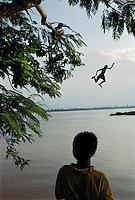 Pakse, Laos, August 18, 2007.Daring boys diving in the Mekong at dusk.