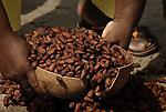 El cacao se va tostando poco a poco, este proceso dura una semana o mas, segun lo que caliente el sol. Aqui vemos como recogen las trabajadoras el cacao del patio de la iglesia.  Chuao. Venezuela. © Juan Naharro