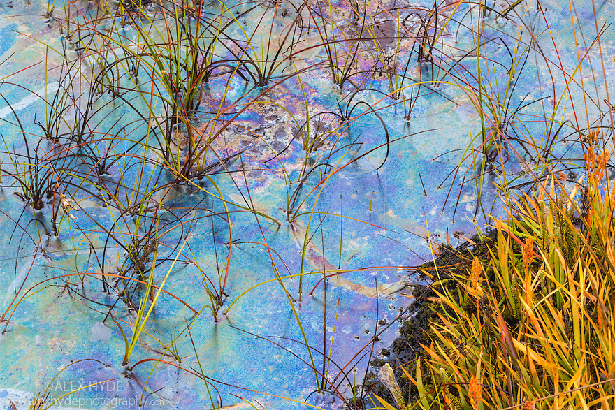 Heathland pool, Surrey, UK. October. The multicoloured film results from chemoautotrophic bacteria that oxidise iron and manganese ions in the water, with the colours being caused by thin film interference.