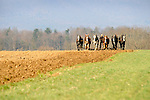 Amishman disking field with six horse team in Nippenose Valley, PA early spring.