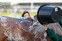 14h April 2018, Aintree Racecourse, Liverpool, England; The 2018 Grand National horse racing festival sponsored by Randox Health, day 3;  Horses get a cooling down after the Grand National