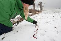 Mädchen, Kind legt aus Hagebutten eine Schlange in den Schnee, Naturkunst im Winter, Hagebutte