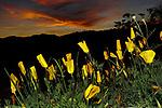 Wildflowers 3/8
