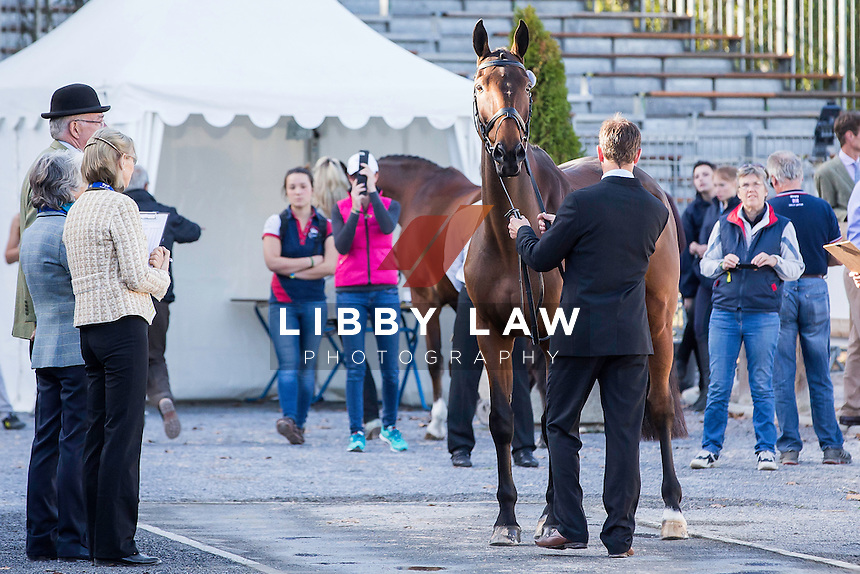 AUS-Kevin McNab (FERNHILL QUALITY STREET) CCI4* FIRST HORSE INSPECTION: 2014 FRA-Les Etoilles de Pau (Wednesday 22 October) CREDIT: Libby Law COPYRIGHT: LIBBY LAW PHOTOGRAPHY - NZL