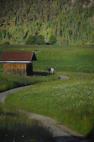 Couple walking along country lane,Imst district, Tyrol/Tirol, Austria, Alps.
