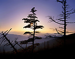 Pine Trees Atop Clingman's Dome At Sunset In The Great Smoky Mountains National Park, Tennessee, North Carolina, USA