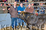 John Griffin from Clahane, Cahersiveen centre wins the Supreme Weanling Bullock at the Iveragh Mart on Tuesday picture here with l-r; Neilie O'Shea(Chairman Iveragh Mart) & Mosey Coffey(Acorn Life).