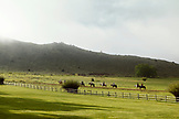 USA, Wyoming, Encampment, guests go for trail ride in the morning, AbarA Ranch