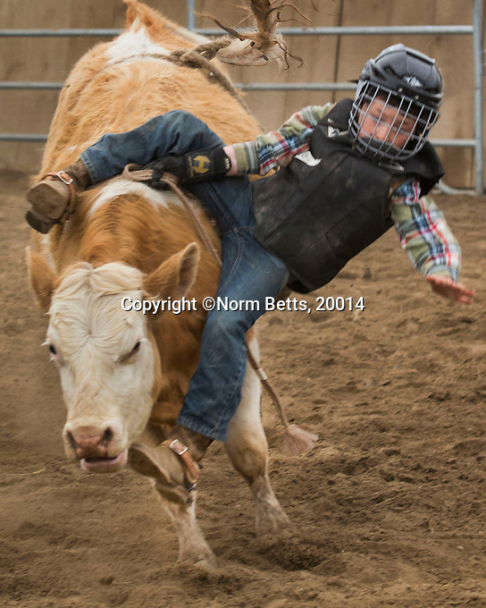 The '&quot;Build a Cowboy&quot; program, supporting Ontario's RAM Rodeo Tour and the Ultimate Rodeo Tour, by two days of training for kids who want to ride Junior Steers in the summer's rodeos and those over 16 who want to to be rodeo bull riders .<br /> <br /> &mdash;photo, Norm Betts, T 416 460 8743<br /> normbetts@canadianphotographer.com